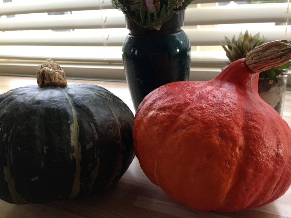 Kabocha & Red Kuri Squash from the Pumpkin Guys on Moss Street