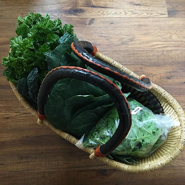 Market basket full of delicious healing eats: #kale #collards #parsley #arugula and underneath there are #shiitake #celeriac #carrots and a loaf of delicious cinnamon raisin rye bread 💗 All #local #organic and full of #prana ✨
