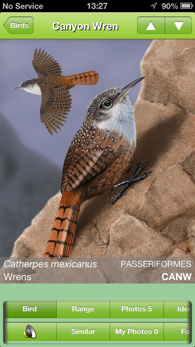 Naturally iBird also includes photos and illustrations.