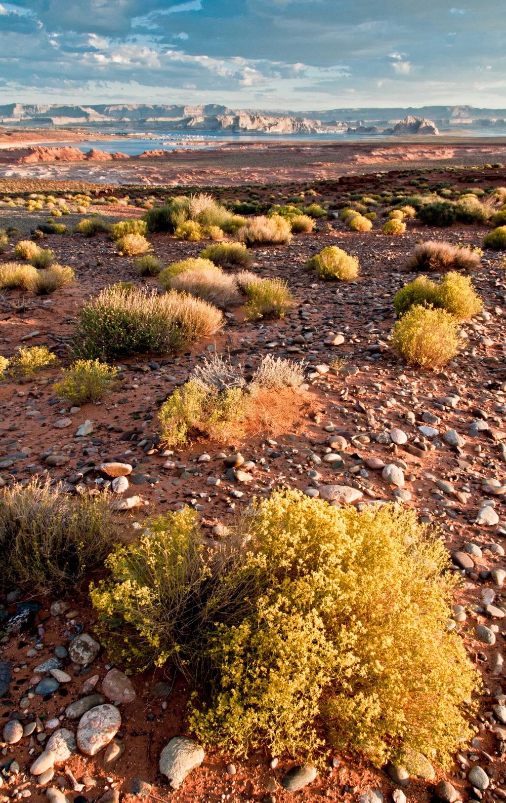 Arizona Desert 2