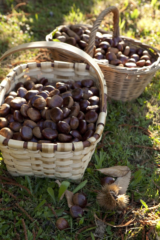 Chestnuts -53.jpg