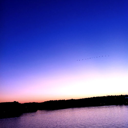 iPhone photography: Migrating Birds