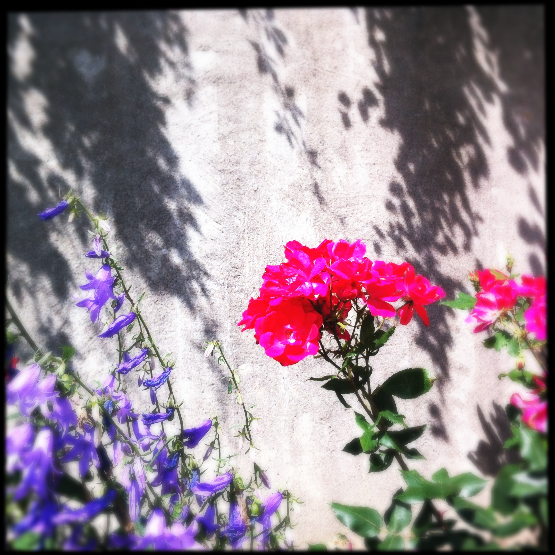 iPhone photo. Hipstamatic app with Loftus lens and Sugar film
