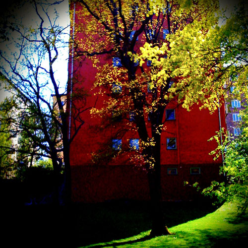 red-building-leaves.jpg