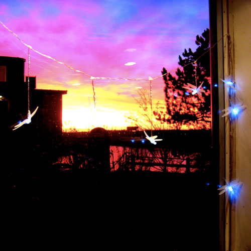 iPhone photography: Firefly lights and a sunset view from the studio.