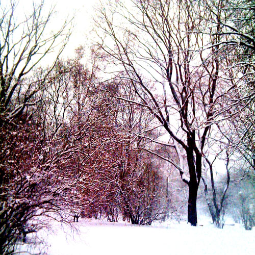 iPhone photography: the park in snow