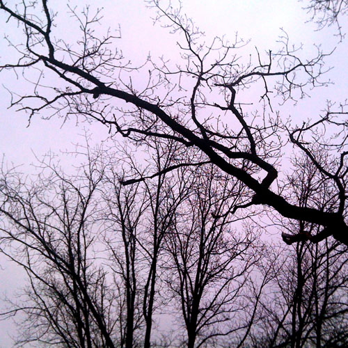 iPhone photography: Silhouette of trees in November