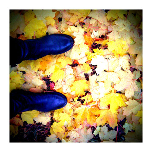 iPhone photography: Walk with maple leaves