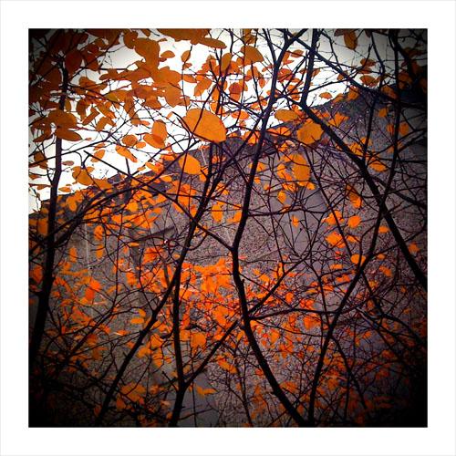 orangeleavesongrey.jpg