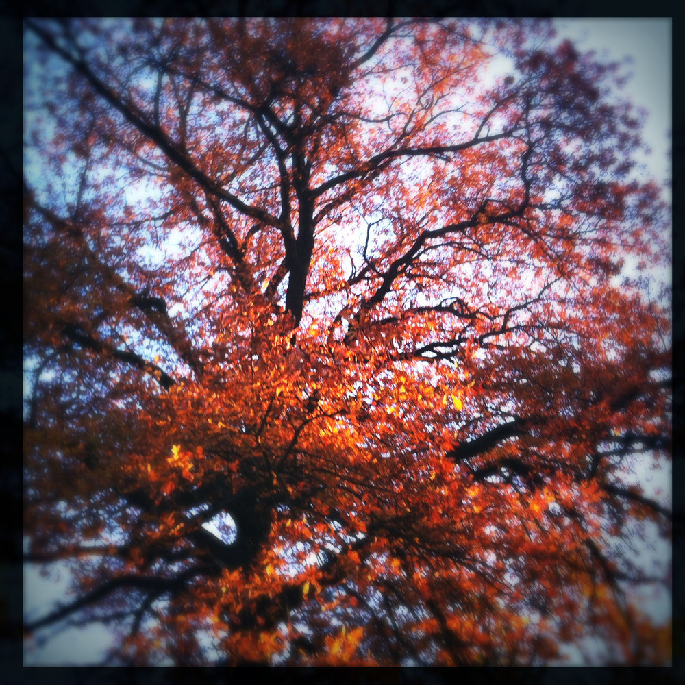 mobile photography: autumn colours