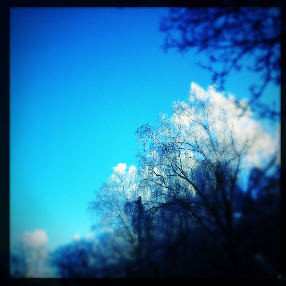 mobile photography: frosty trees