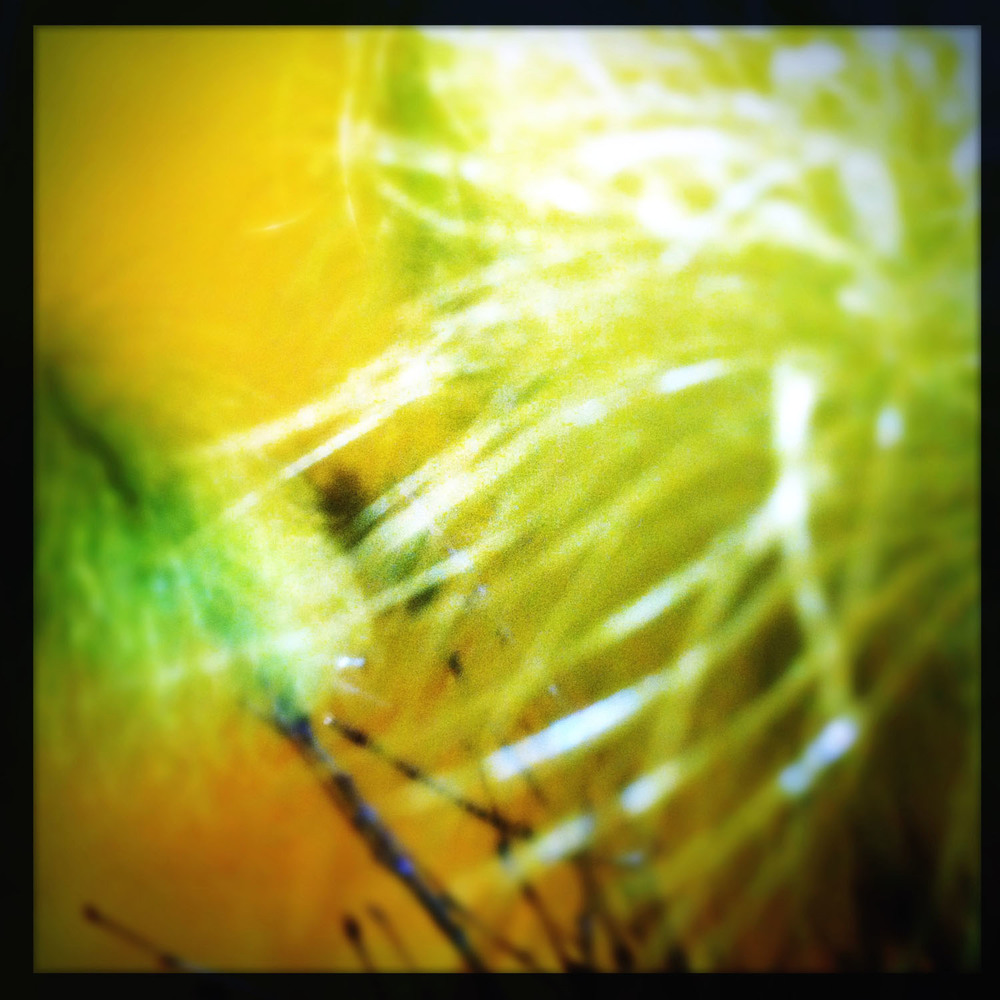 iPhone photo: Easter feathers