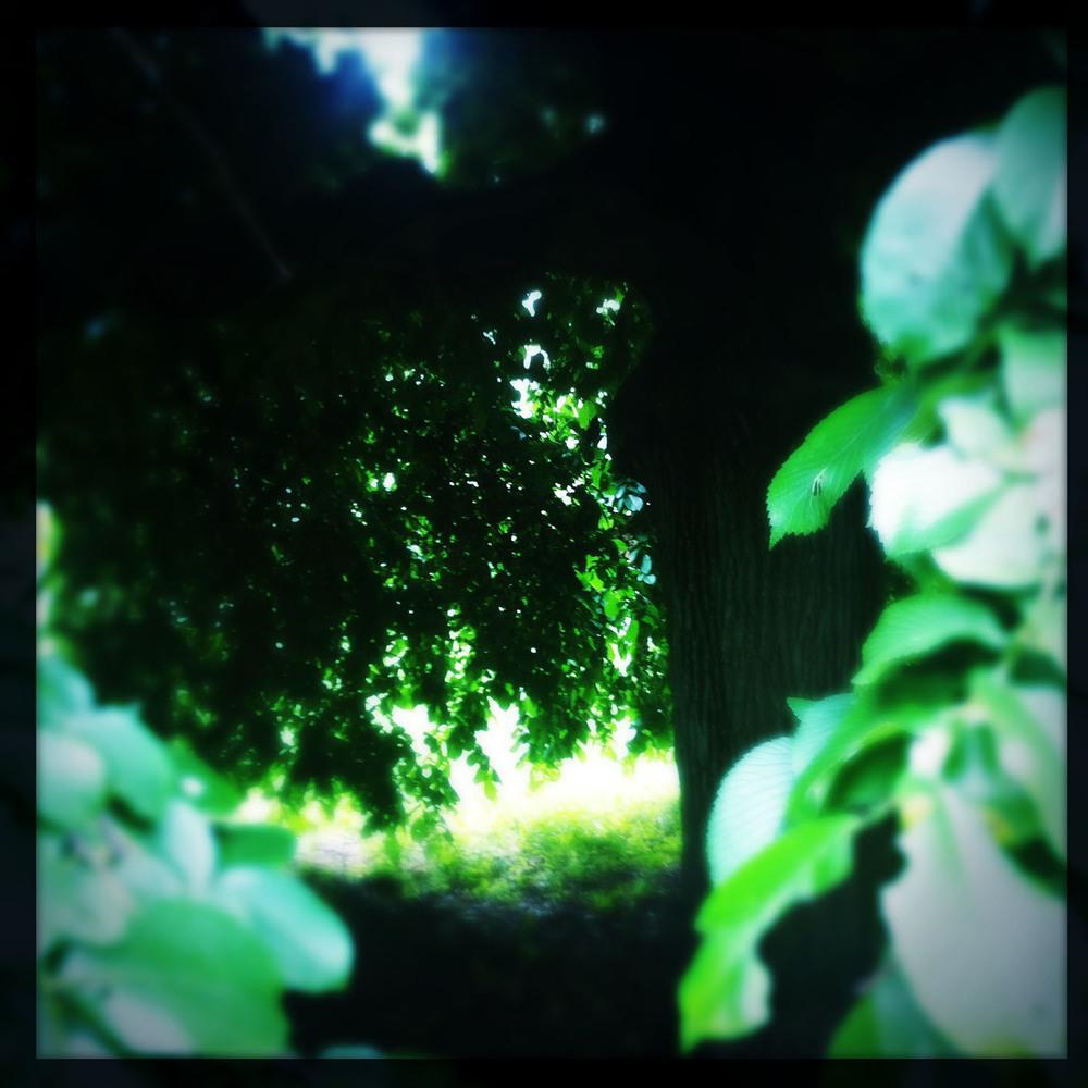 tree-cave.JPG