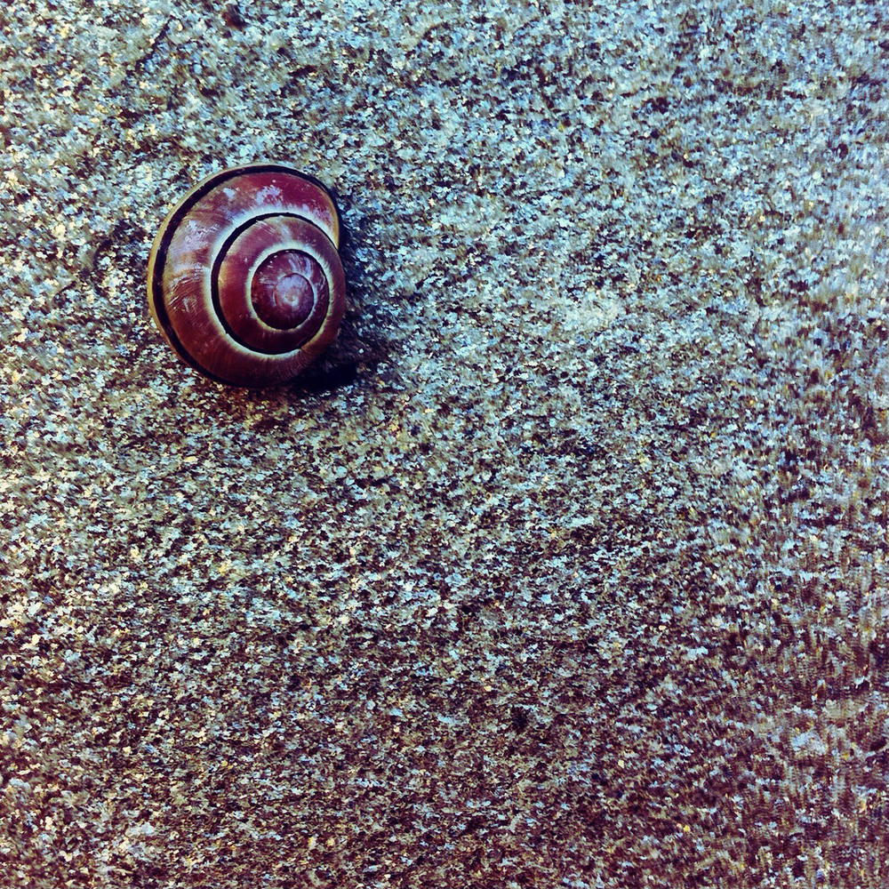 Garden Snail. iPhone photo by Kate England.
