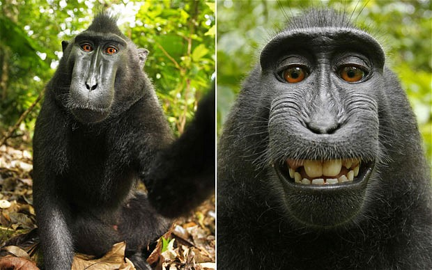 I wonder if this is fake.    (via  Monkey steals camera to snap himself - Telegraph )