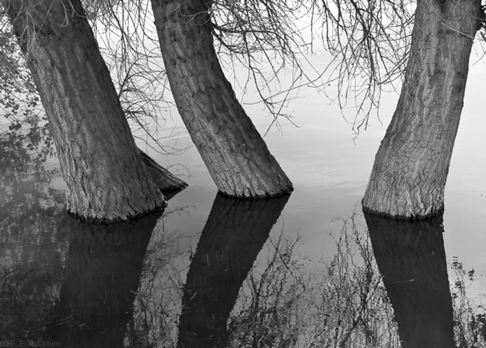 Three trunks