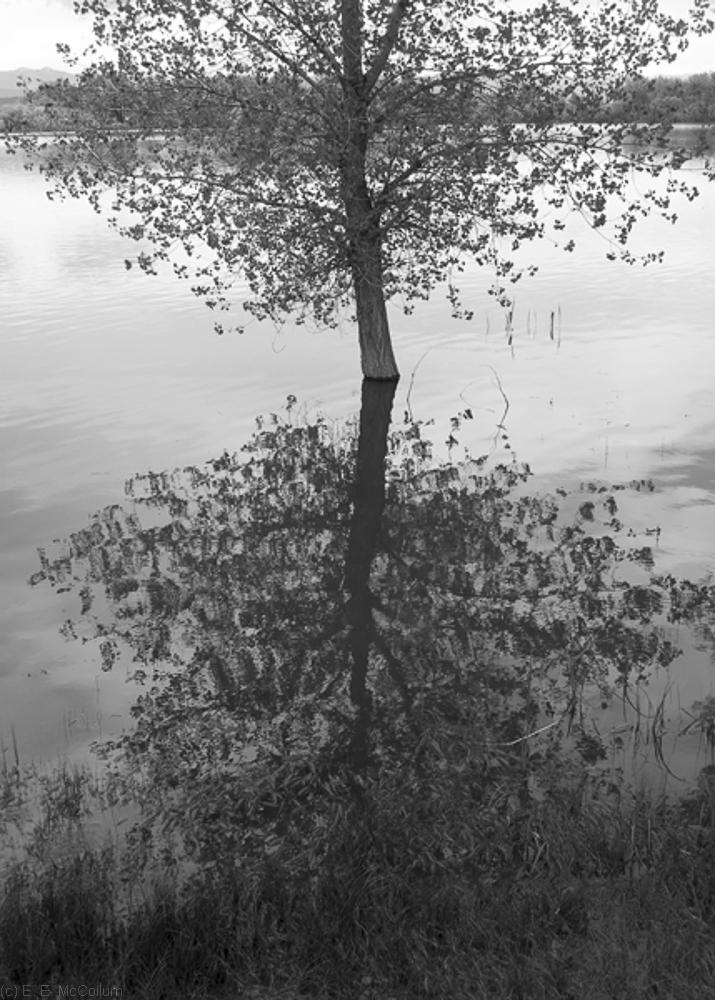 Shore Trees #2