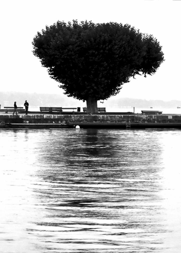 Geneva trees #2