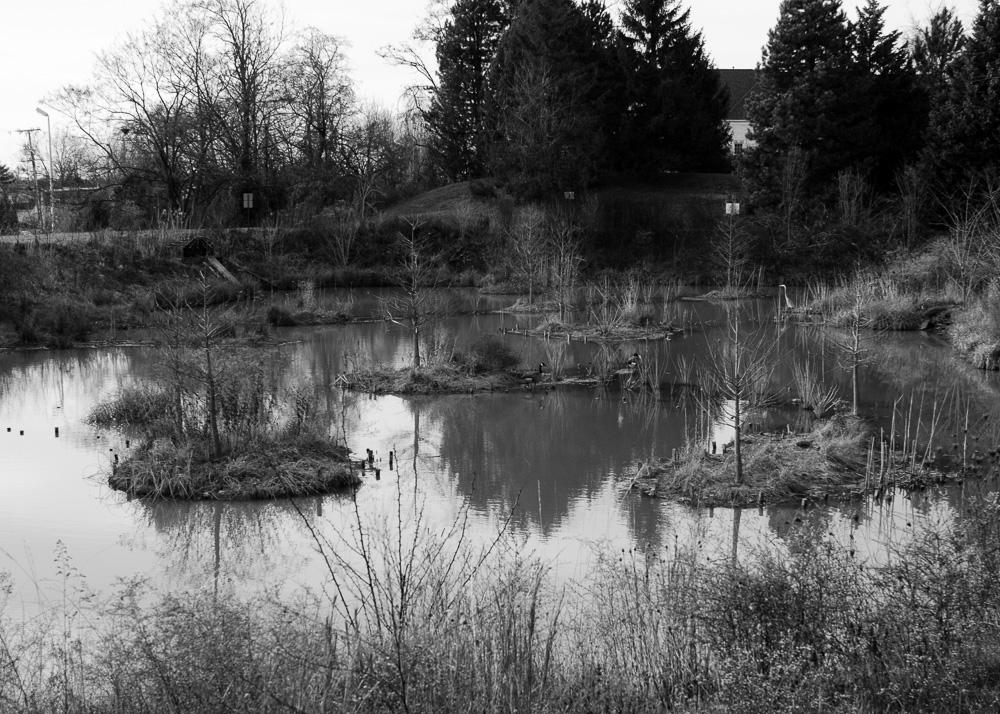 Cub Run Pond