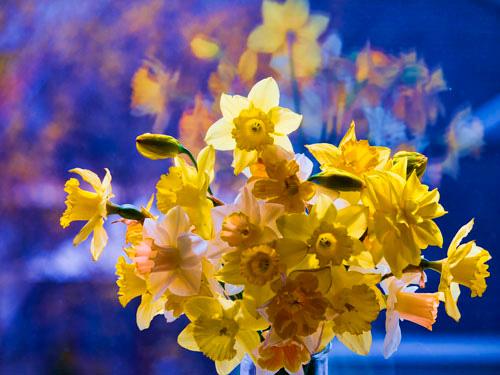 Daffodil-1.jpg