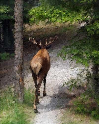 Solitary Stroll by J.Gazo-McKim © 2010