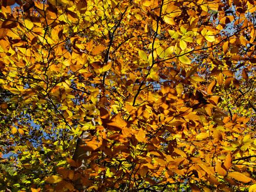 Branches of Gold by J. Gazo-McKim©2012