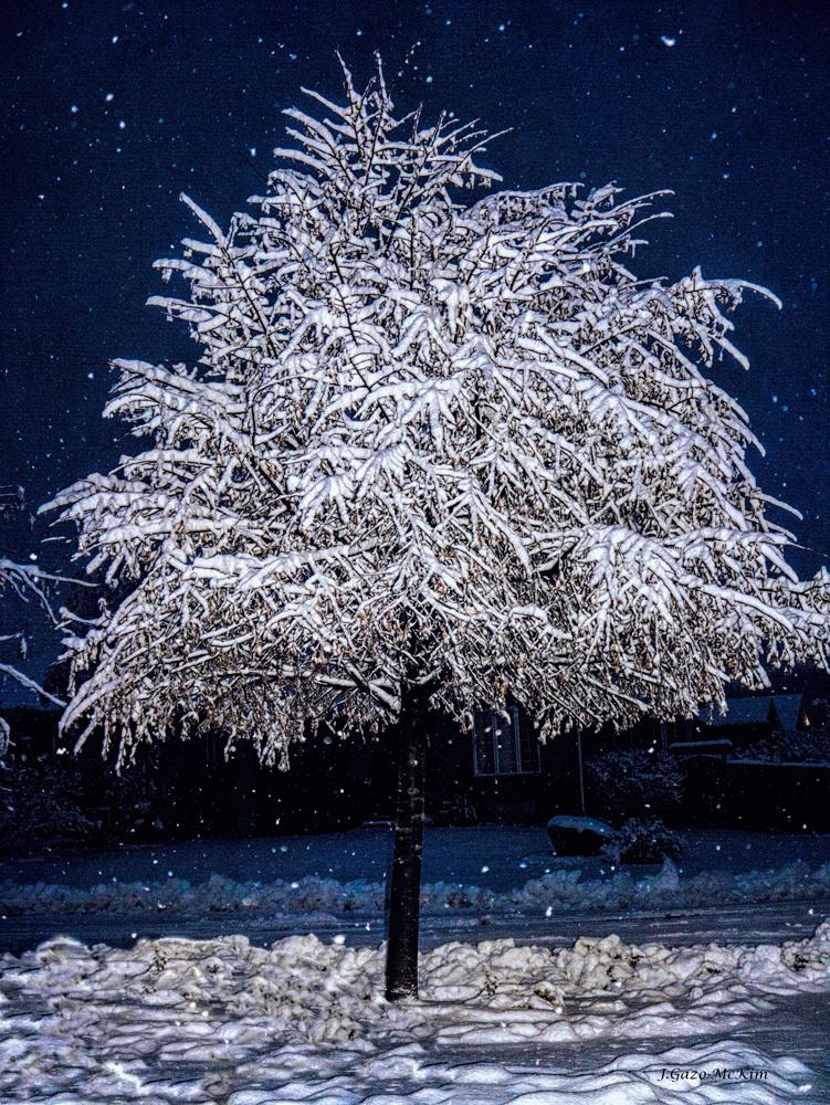 Winter Wrapping by J. Gazo-McKim ©2013