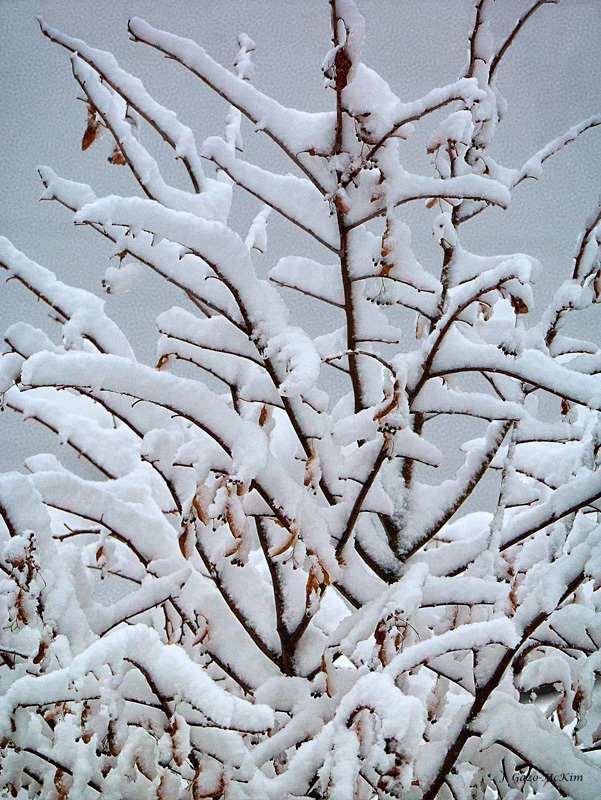 Snow Laden by J. Gazo-McKim ©2013