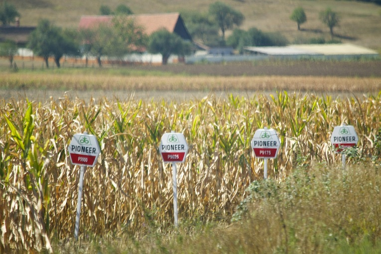 GMO Pioneer Corn - Romania