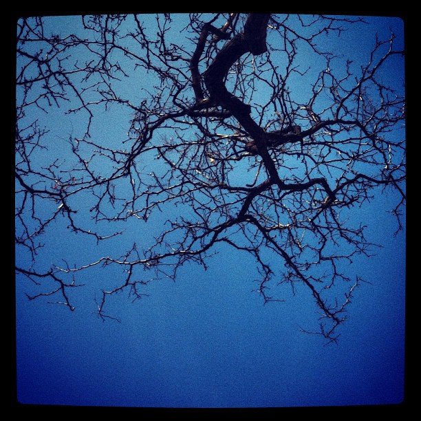 bare branches.jpg