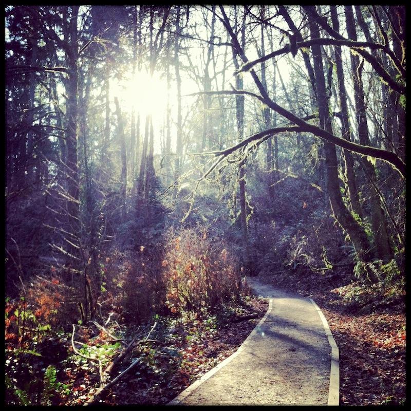 forest trail.jpg