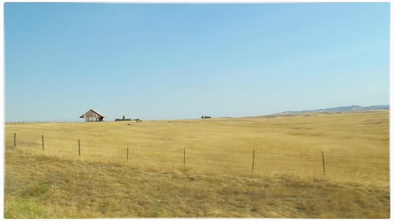 blue sky yellow field.jpg