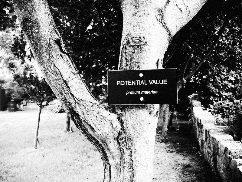 potential value.jpg