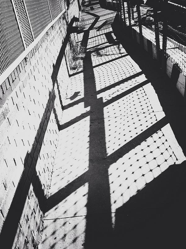 sunny 1.jpg