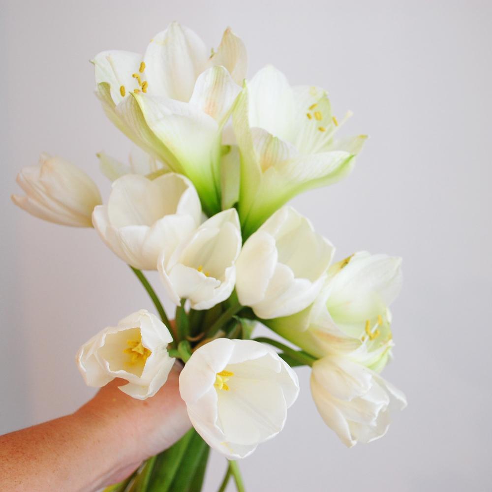 Amaryllis-Tulips-White-00.jpg