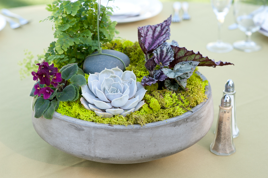Potted-plant-centerpiece.jpg