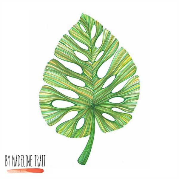 Montera-Leaf-Illustration-Madeline-Trait.jpg