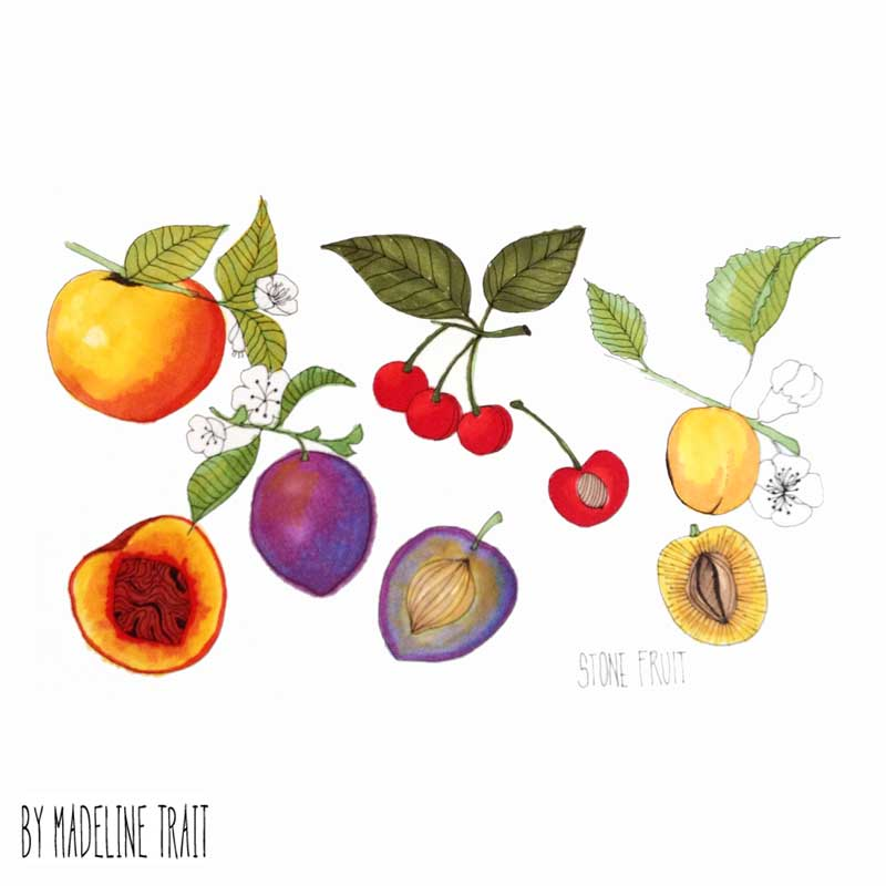 Stone-Fruit-Illustration-Madeline-Trait.jpg