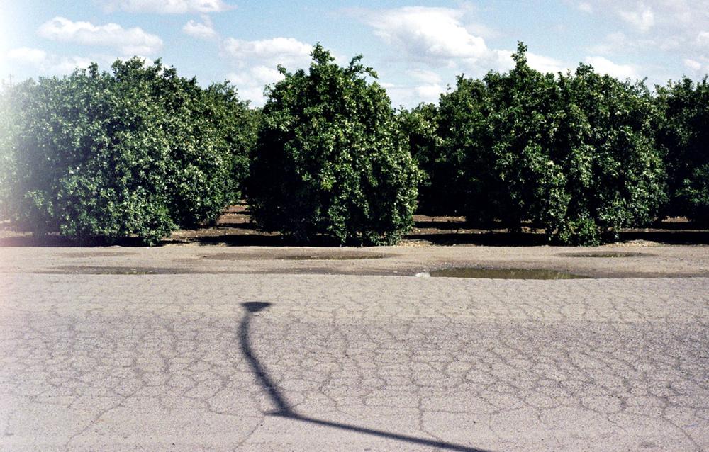 orangegrove.jpg