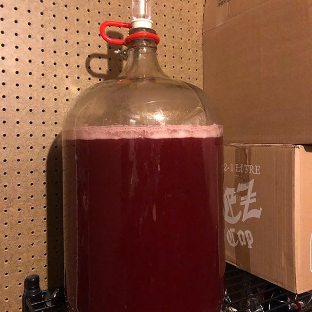Five gallons of some of the best cider in Denver 25% cherry and 75% PNW organic apple juices with mosaic hop + lemon and orange peel  #cider #apple #cherry #hops #delicious #denver #colorado #applecider