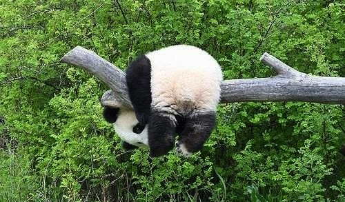 OOPS! This page has fallen asleep. Please click on the Panda to send us an email.