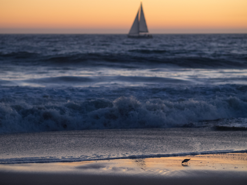 Sailboat & Sandpiper