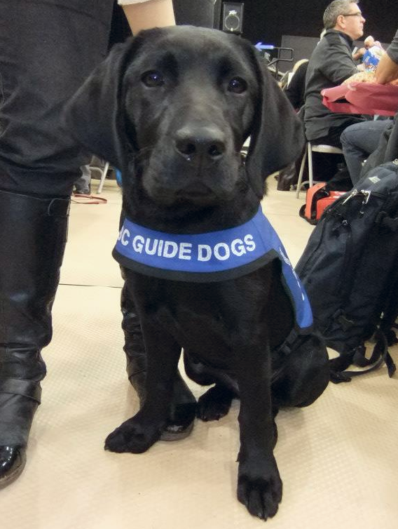 Pammy at the BC Guide Dog Trivia Night.