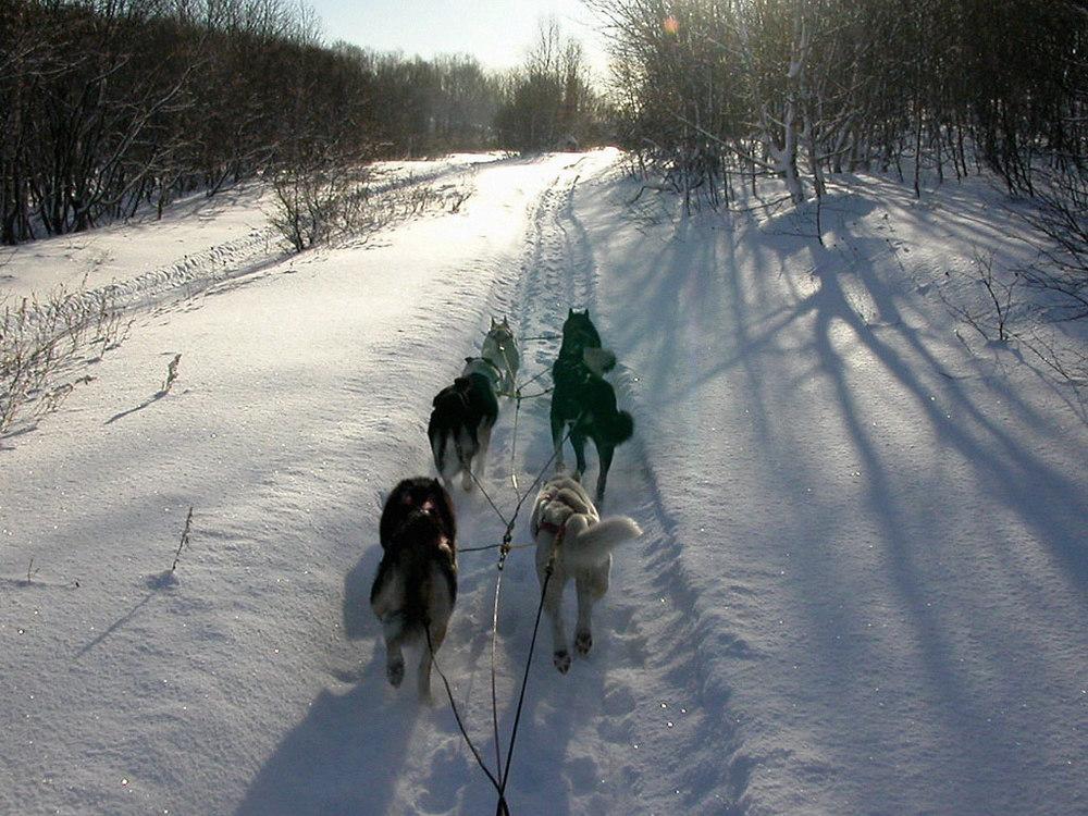 Snowy_Winter_-_Dog_Mushing_Season.jpg