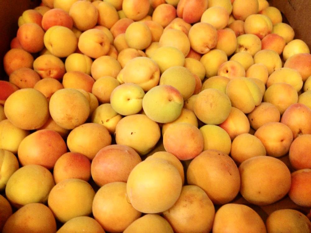 apricot flats.jpg