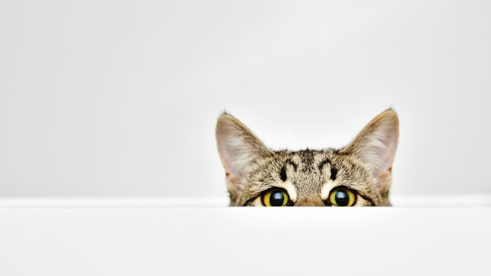 curious cat.jpg