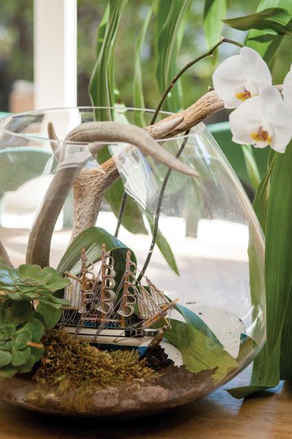 plants_terrarium.jpg
