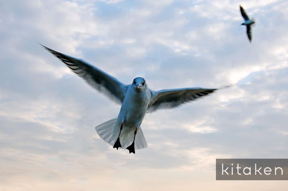 flying_bird_e.jpg