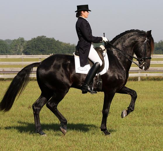 Land Rover's Sire LEXINGTON