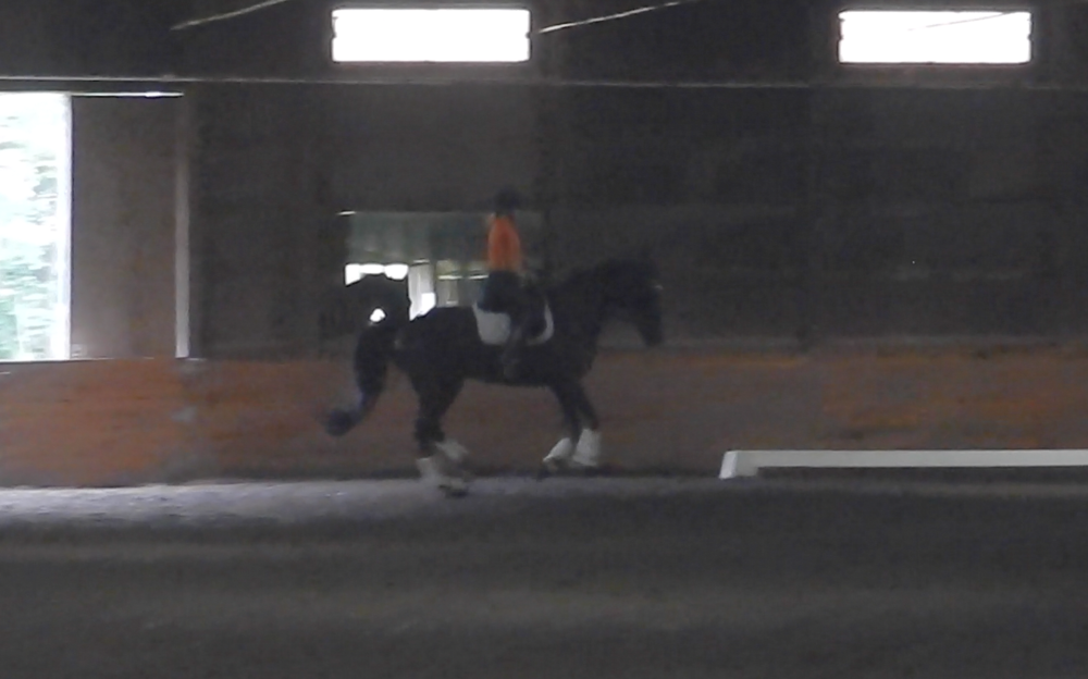Ricardo - Good show record at Training, 1st and 2nd levels